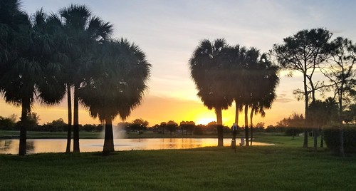 sunset sunshinestate palmtrees pond