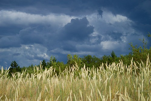 latvia mangaļsala rīga latvija lettland storm landscape nature forest bush grass gold clouds sky green blue irina galitskaya galterrashulc nikon d3200 5500 30000 mm f45 56