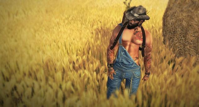 ..::: Wheat Field :::..