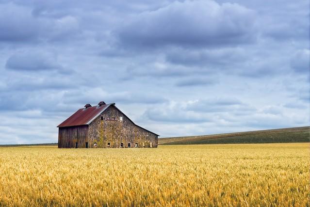 Cloudy Wheatfield Barn 447 A