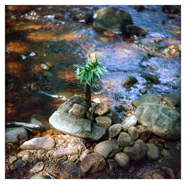 The world's smallest palm tree