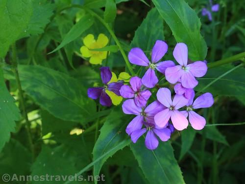 Summer Wildflowers in Webster Park, New York