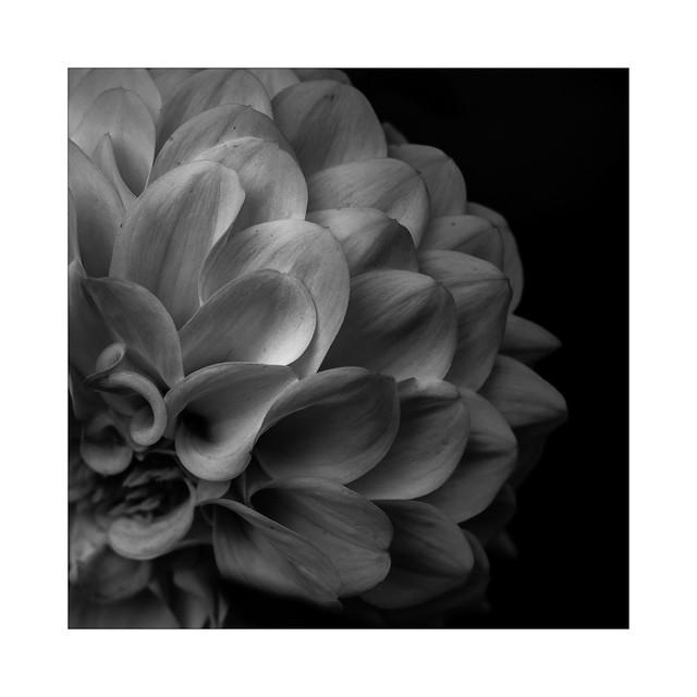 Layered petals
