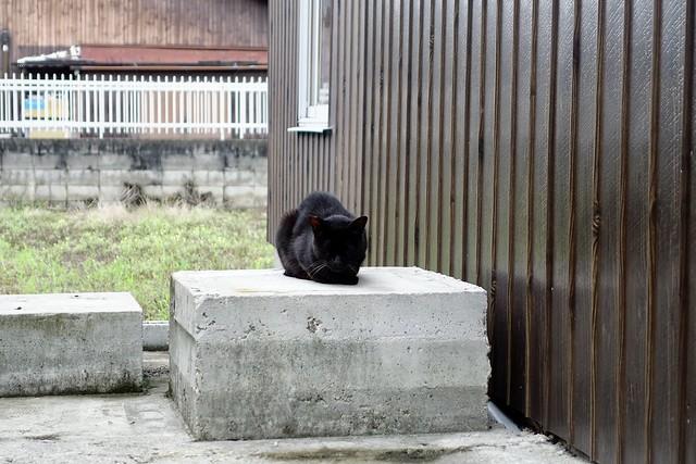 Today's Cat@2020ー07ー16