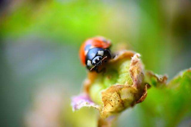 Mr. Ladybird (The Gender Studies Teacher)