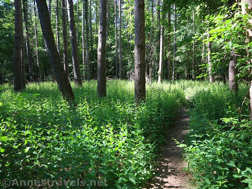 Along a trail in Webster Park, New York