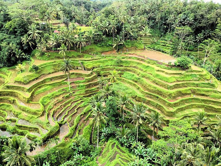 Ubud is the side of Bali
