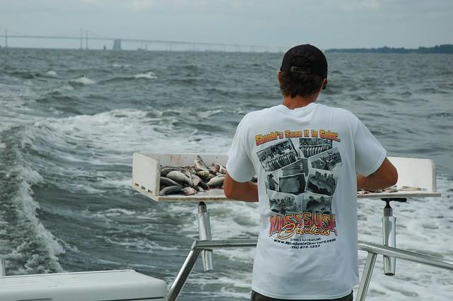 Fishing on the Bay with Joe July 2020