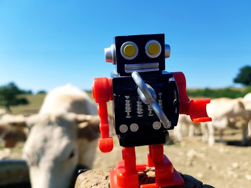 Robot and cow