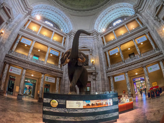 Elephant at the Natural History Museum in Washington, DC