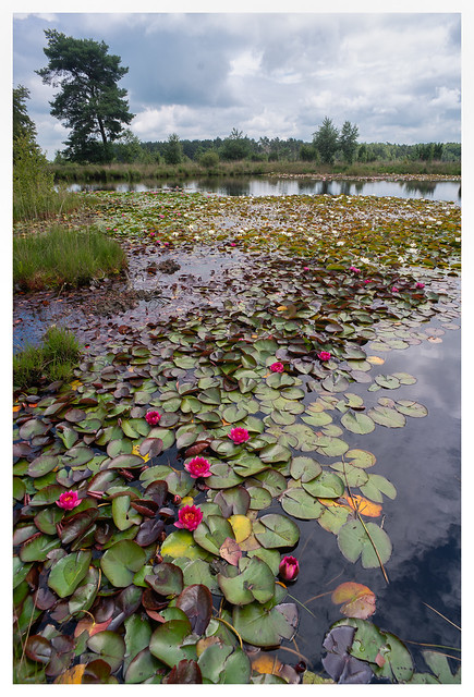 Dwingelderveld National Park, Drenthe, The Netherlands