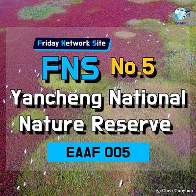 EAAF005 (Yancheng National Nature Reserve) Card News