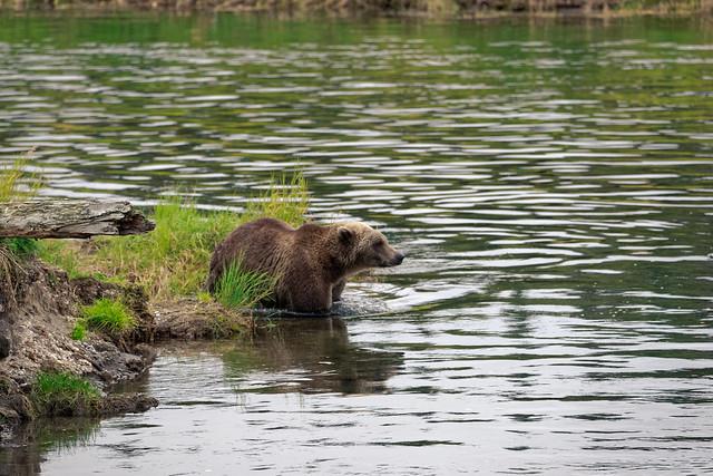 See Alaska (Katmai National Park & Preserve)