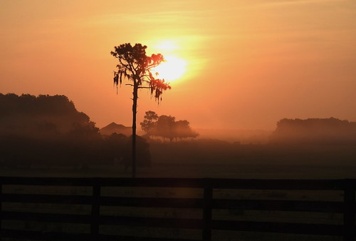 mist sky orange morning sunrise tree sun nature countryside creamsicle