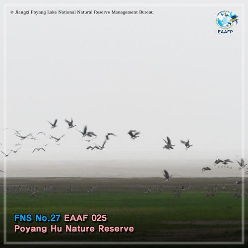 EAAF025 (Poyang Hu Nature Reserve) Card News