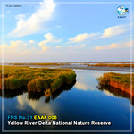 No. 31_#FlywayNetworkSite (Yellow River Delta National Nature Reserve) Card News