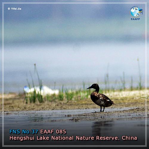EAAF085 (Hengshui Lake National Nature Reserve) Card News