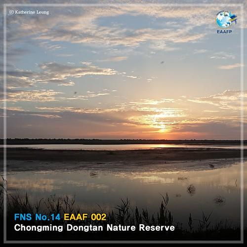 EAAF 002 (Chongming Dongtan Nature Reserve) Card News