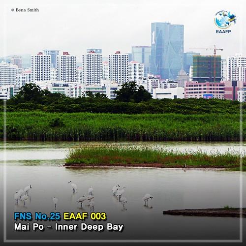 EAAF003 (Mai Po Inner Deep Bay) Card News