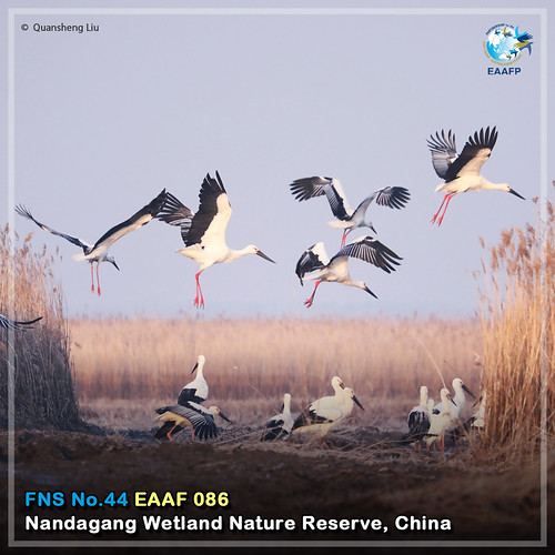EAAF086 (Nandagang Wetland Nature Reserve) Card News