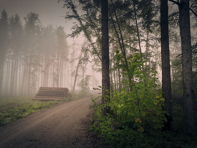 Ein Morgen im Nebel