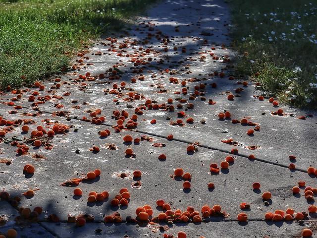 Naranja Redondo o Plano