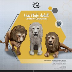 [Rezz Room] Lion Male Adult Animesh (Companion)