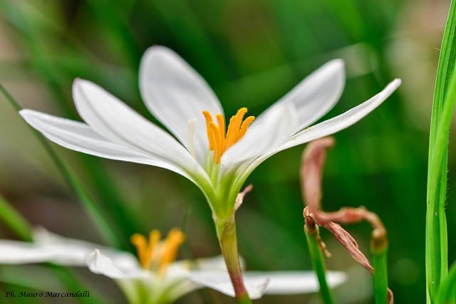 Flora del fiume Adda