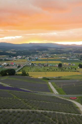 japan travel lavender landscapes hokkaidó furano irl