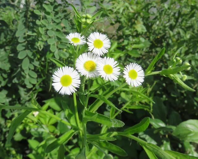 Mini-Wakan State Park Flowers (Dickinson County, Iowa)