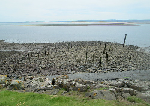 Stumps on foreshore, Lindisfarne