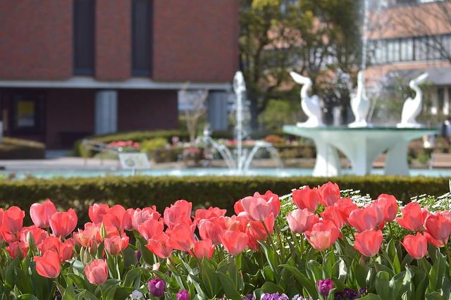 チューリップ花壇と噴水