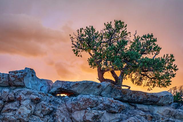 Piñon Sunset
