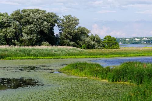 river mohawkriver water waterchestnut color green landscape niskayuna schenectadycounty newyork capitaldistrict outdoor invasiveplant pentax pentaxart kmount k70 smcpentaxda50135mmf28lens