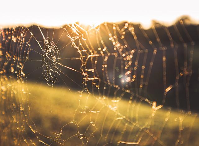 Spiderweb_mywritingtherapy