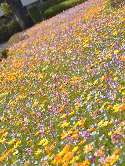 ワイルドフラワー花壇