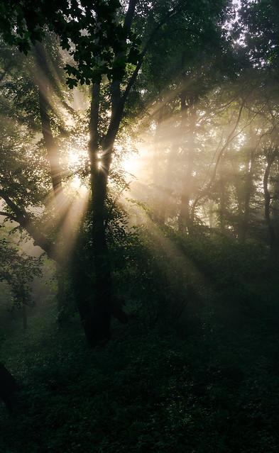 Sun & forest