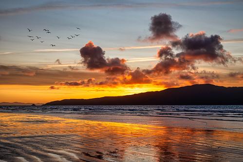 sunset silhouette waikanaebeach cloudoverkapitiisland nz duskwalk birdsinflight southisland fantasticnature