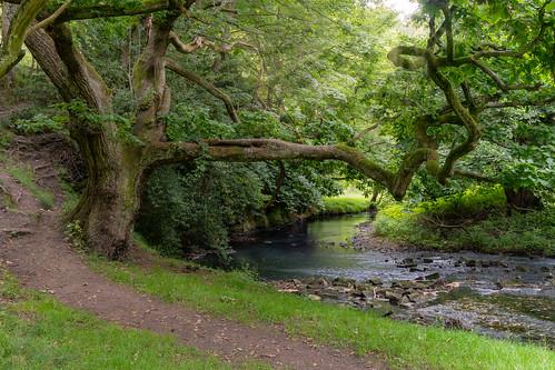 gaunless river landscape oak tree frame bishop auckland