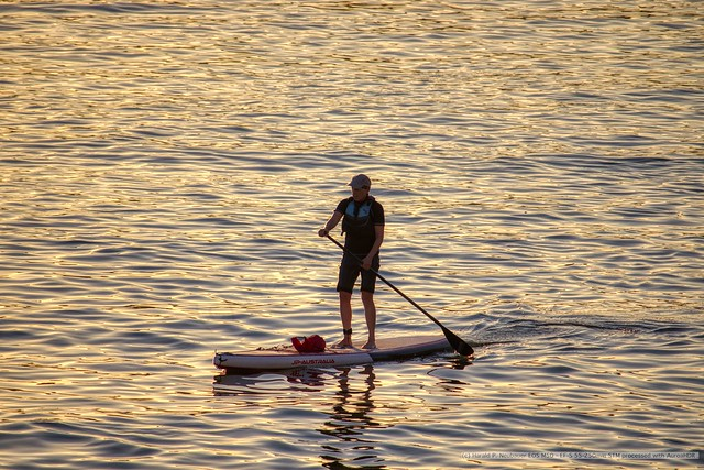 Stand up paddle on the Rhine (Wiesbaden)