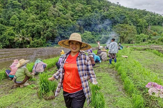 Mae Chaem – rizières de Ban Mae wae - Province de Chiang Mai - OnaKuneVie