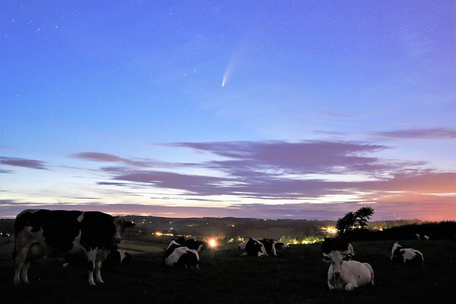 Comet NEOWISE above cattle