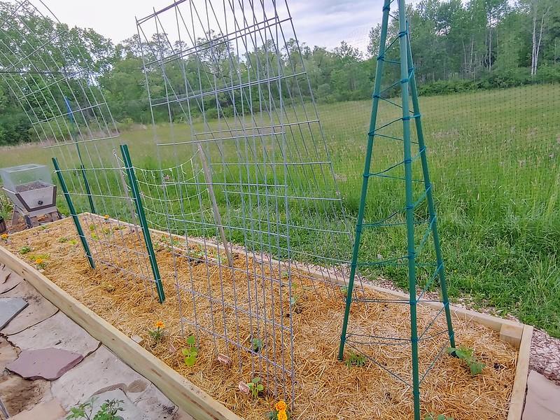 Installing trellises for plants