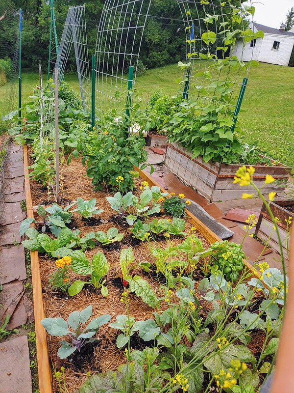 After: the Vegetable Garden