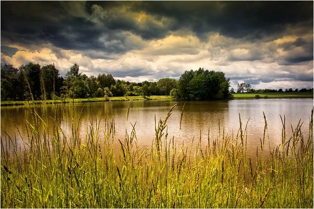 Gras am Teich