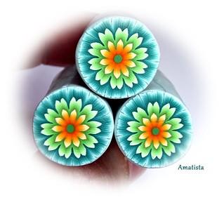 Dalia tricolor
