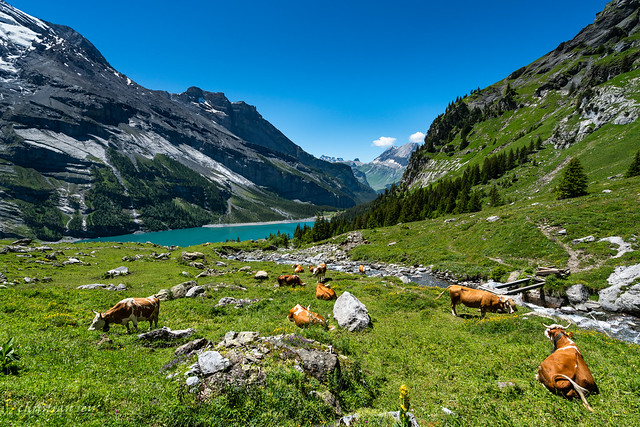 Underbärgli, Oeschinensee (Switzerland)