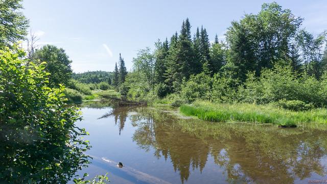 Marais du Nord, Nord du Lac Saint-Charles, PQ, Canada - 4648