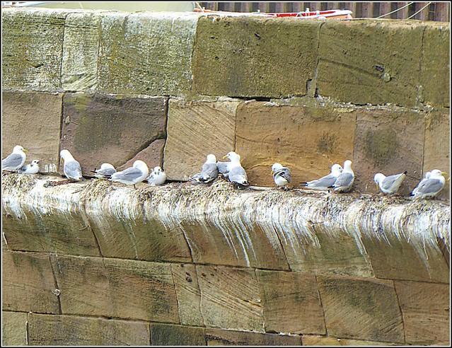 Line-Up of Seaguls ...