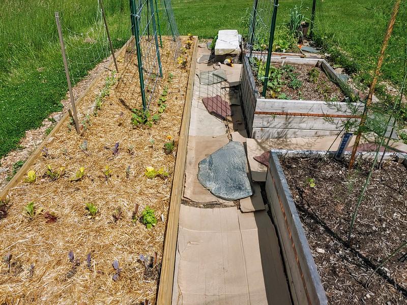 Vegetable garden, ready to grow!